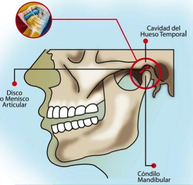 La articulación temporomandibular y la postura